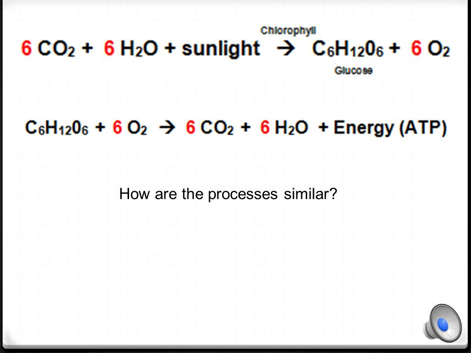 Cellular Respiration Which of the substances involved in Cellular respiration are elements.