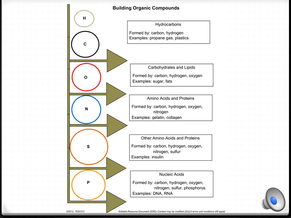What are Organic Compounds.