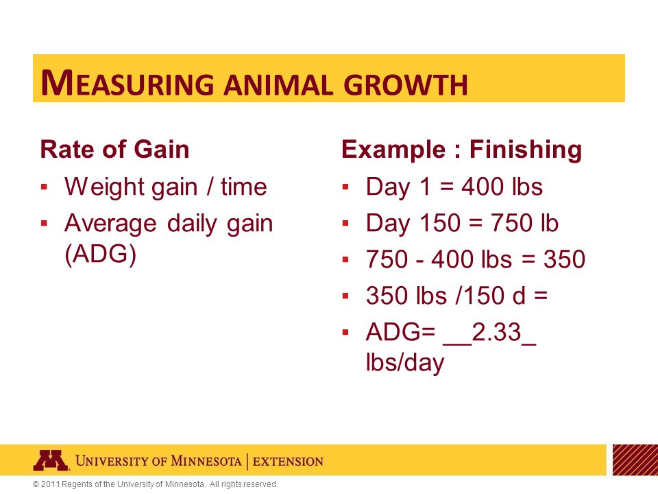 © 2011 Regents of the University of Minnesota. All rights reserved. Rate of Gain ▪Weight gain / time ▪Average daily gain (ADG) Example : Finishing M E
