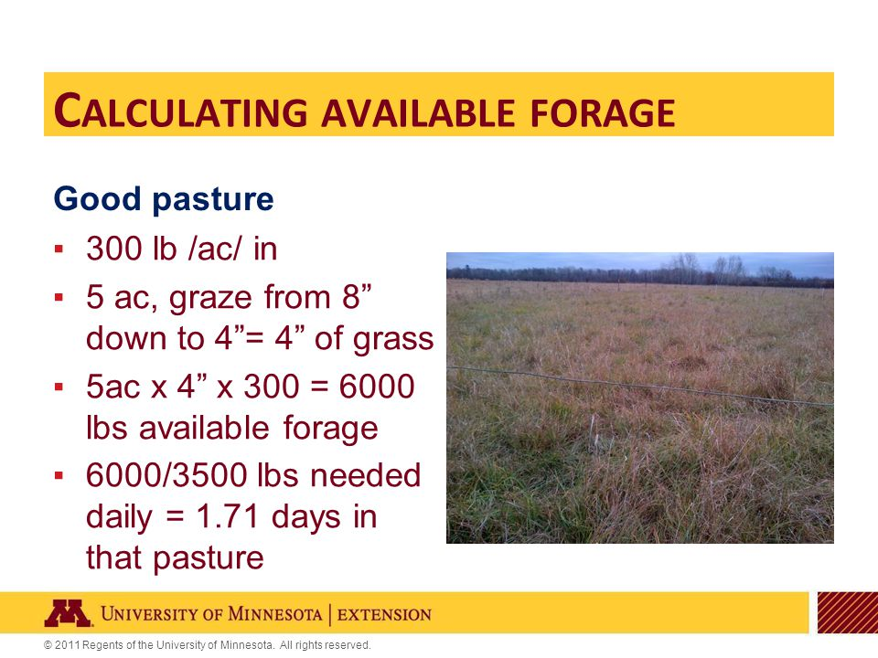 "© 2011 Regents of the University of Minnesota. All rights reserved. Good pasture ▪300 lb /ac/ in ▪5 ac, graze from 8"" down to 4""= 4"" of grass ▪5ac x 4"