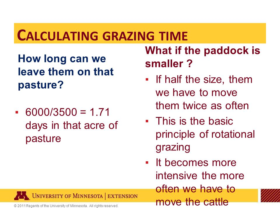 © 2011 Regents of the University of Minnesota. All rights reserved. How long can we leave them on that pasture? ▪6000/3500 = 1.71 days in that acre of