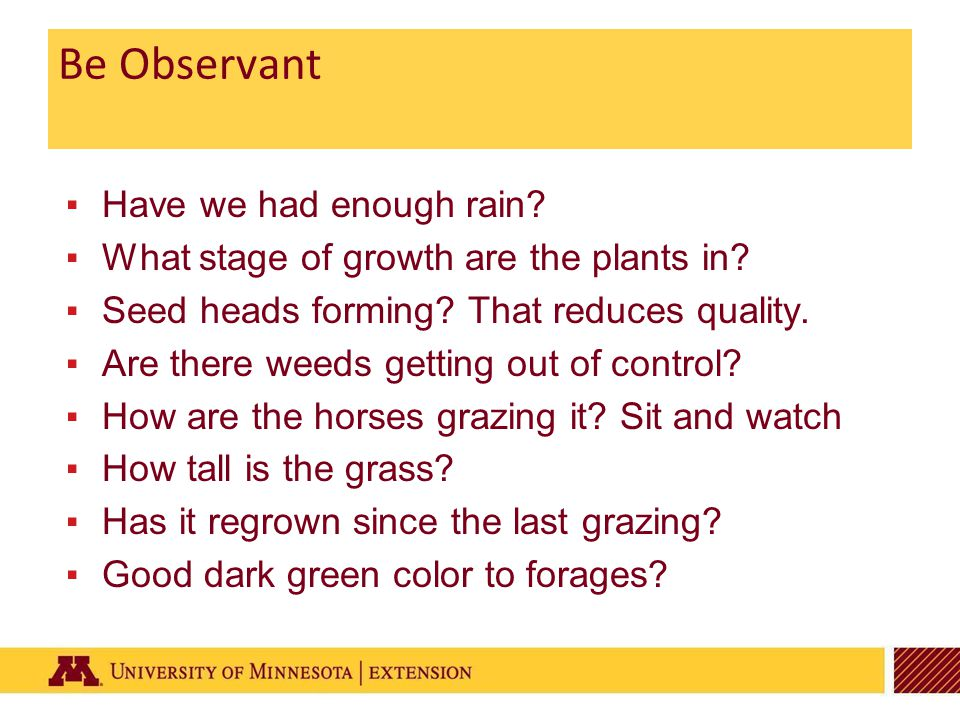Be Observant ▪Have we had enough rain. ▪What stage of growth are the plants in.