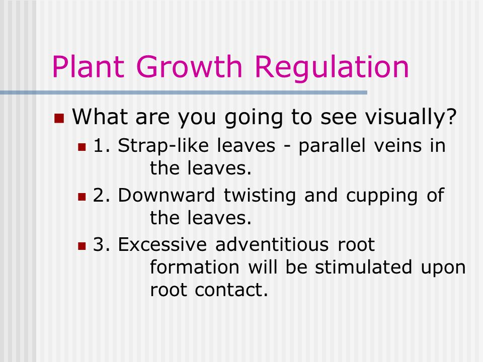 Plant Growth Regulation What are you going to see visually.