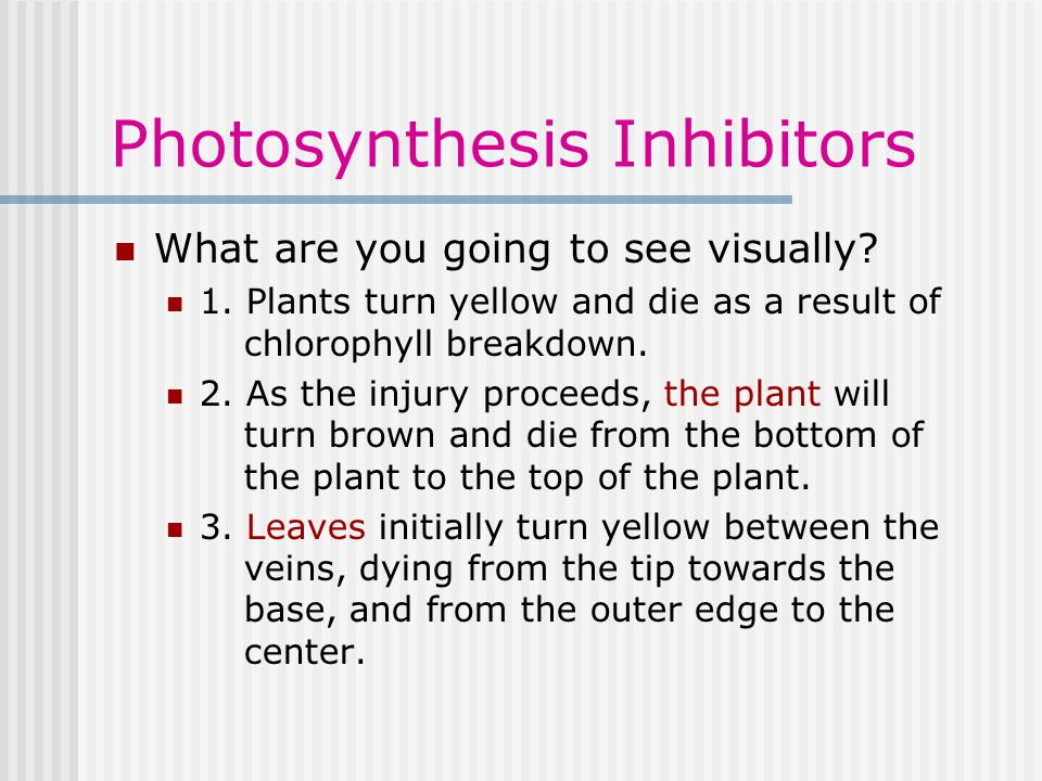 Photosynthesis Inhibitors What are you going to see visually.