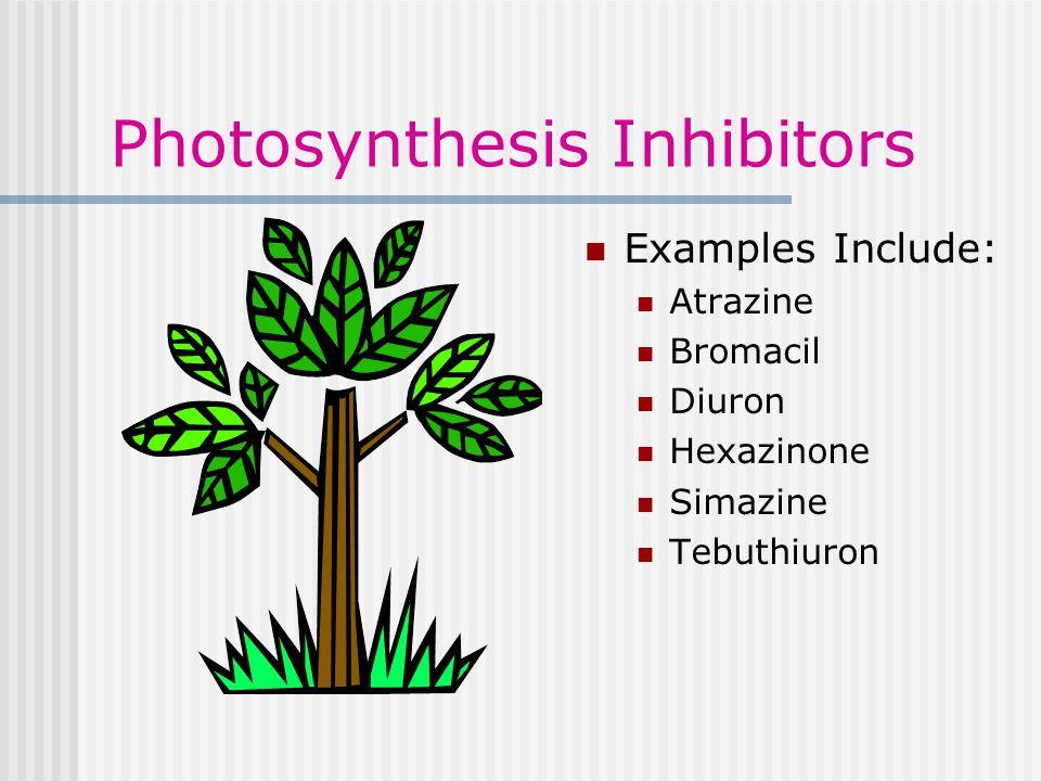 Photosynthesis Inhibitors Examples Include: Atrazine Bromacil Diuron Hexazinone Simazine Tebuthiuron