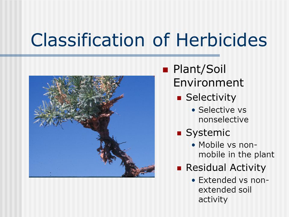 Classification of Herbicides Plant/Soil Environment Selectivity Selective vs nonselective Systemic Mobile vs non- mobile in the plant Residual Activity Extended vs non- extended soil activity