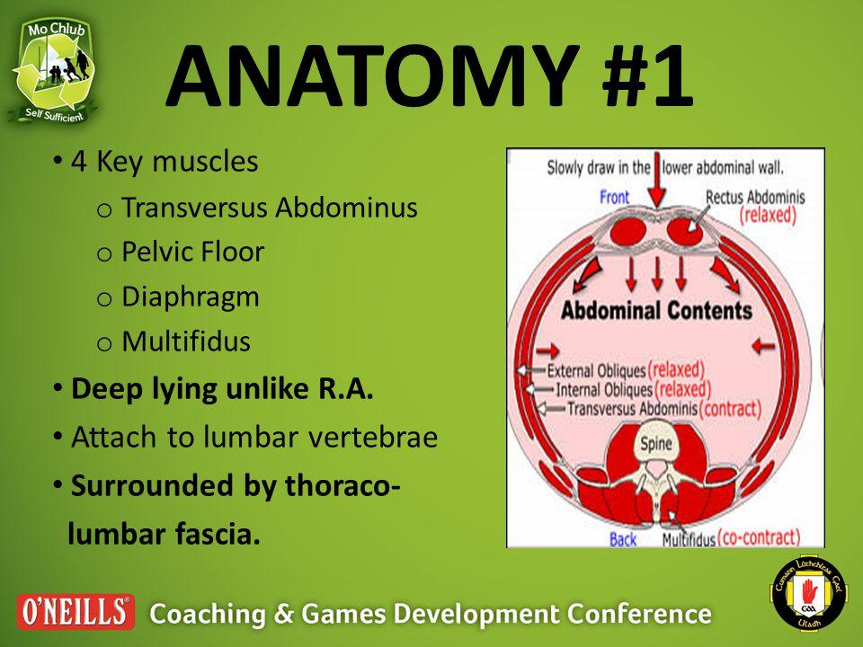ANATOMY #1 4 Key muscles o Transversus Abdominus o Pelvic Floor o Diaphragm o Multifidus Deep lying unlike R.A.