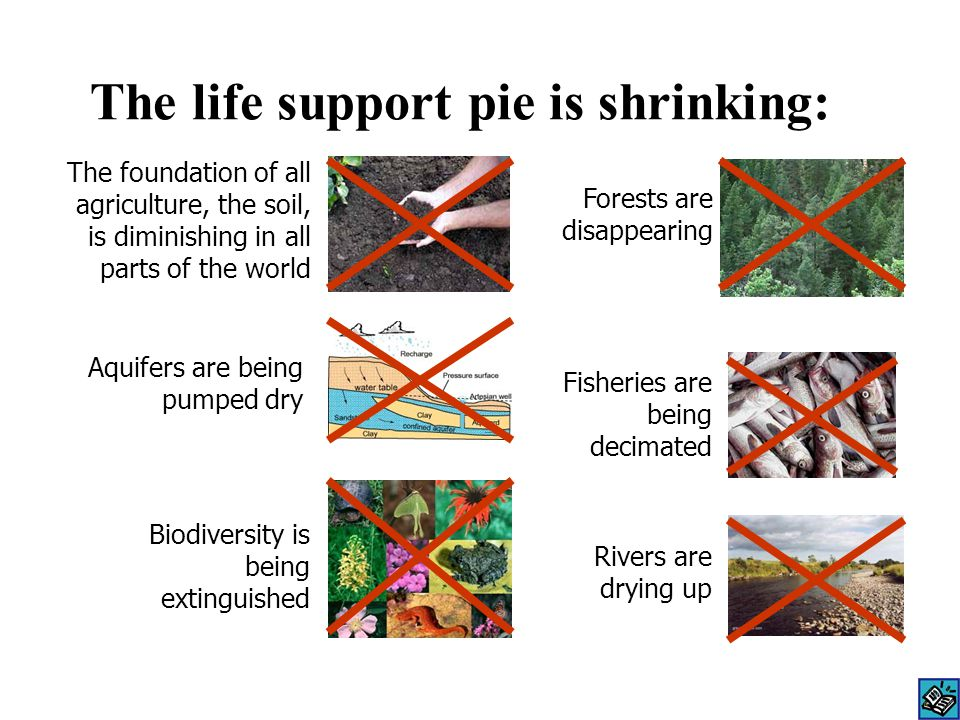 The life support pie is shrinking: The foundation of all agriculture, the soil, is diminishing in all parts of the world Aquifers are being pumped dry Forests are disappearing Fisheries are being decimated Biodiversity is being extinguished Rivers are drying up