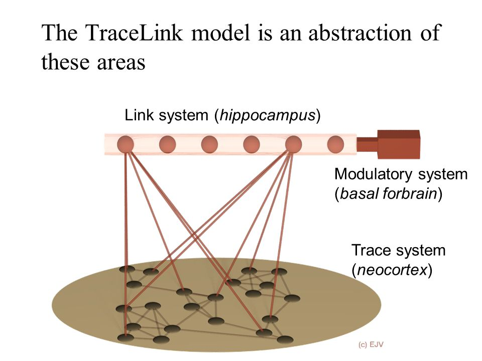 The TraceLink model is an abstraction of these areas Link system (hippocampus) Trace system (neocortex) Modulatory system (basal forbrain)