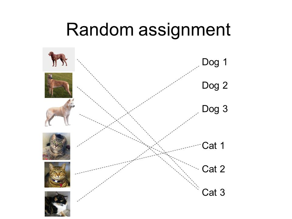 Random assignment Cat 1 Cat 2 Cat 3 Dog 1 Dog 2 Dog 3