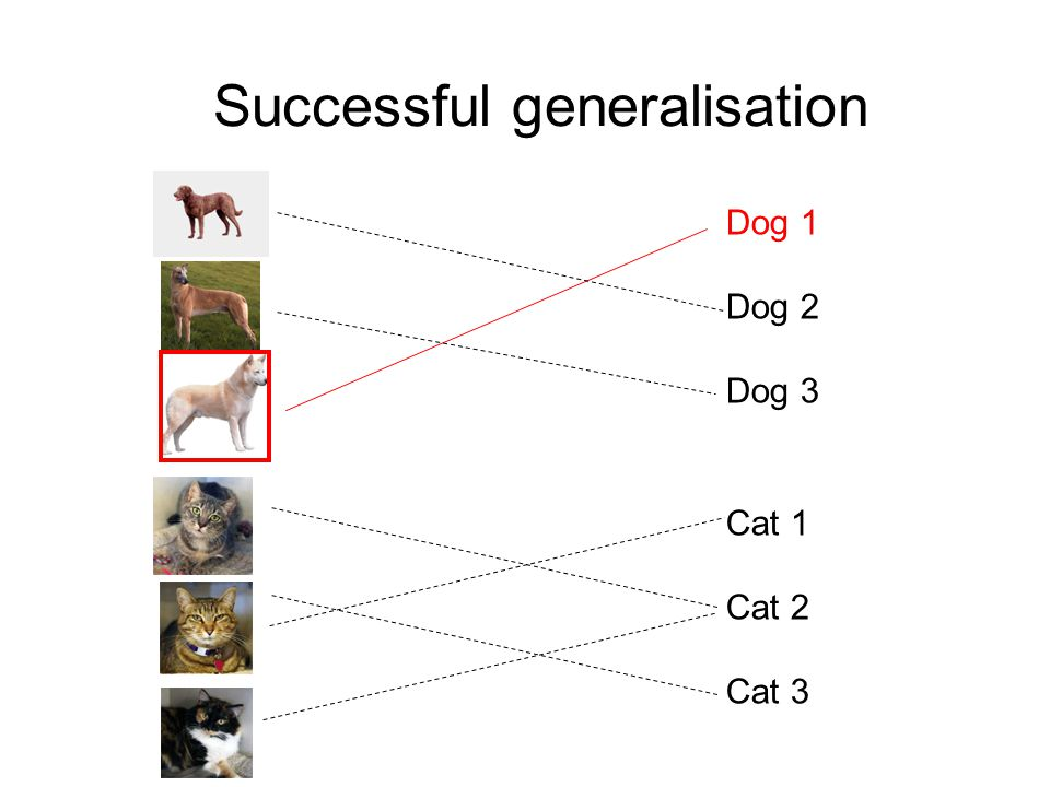 Successful generalisation Cat 1 Cat 2 Cat 3 Dog 1 Dog 2 Dog 3