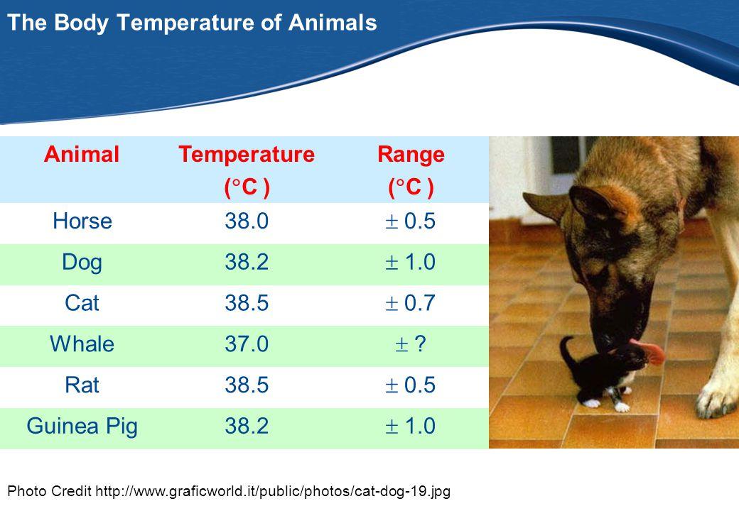 PfB The Body Temperature of Animals AnimalTemperature (  C ) Range (  C ) Horse38.0  0.5 Dog38.2  1.0 Cat38.5  0.7 Whale37.0  .