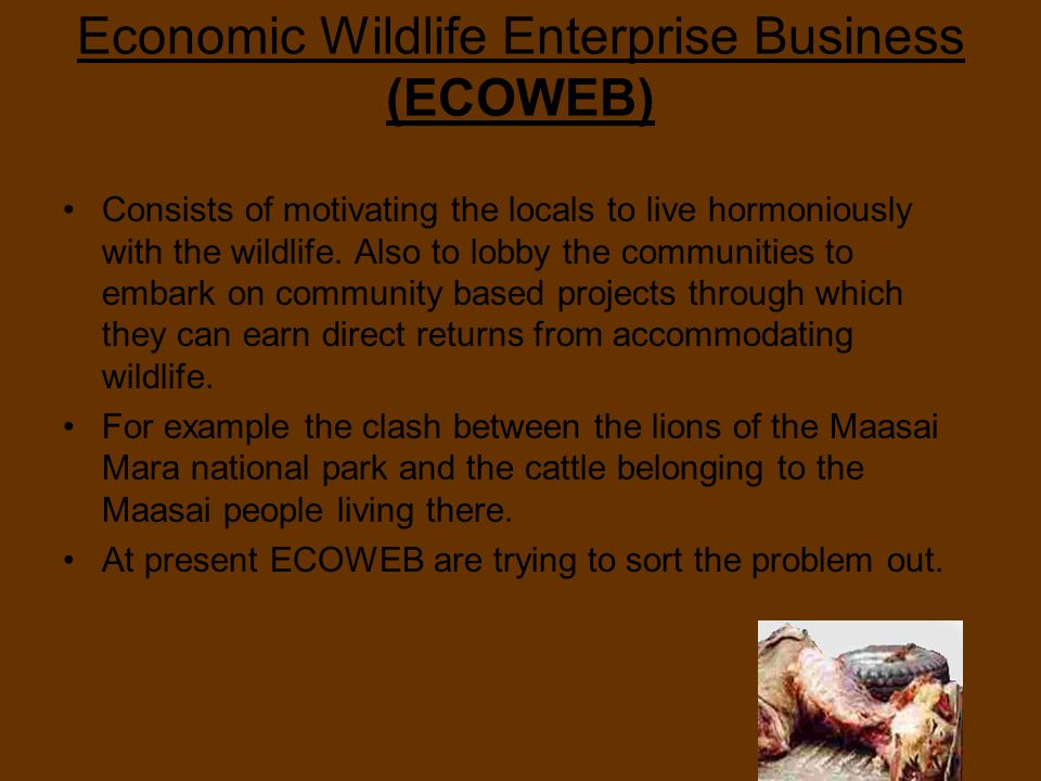 Economic Wildlife Enterprise Business (ECOWEB) Consists of motivating the locals to live hormoniously with the wildlife.