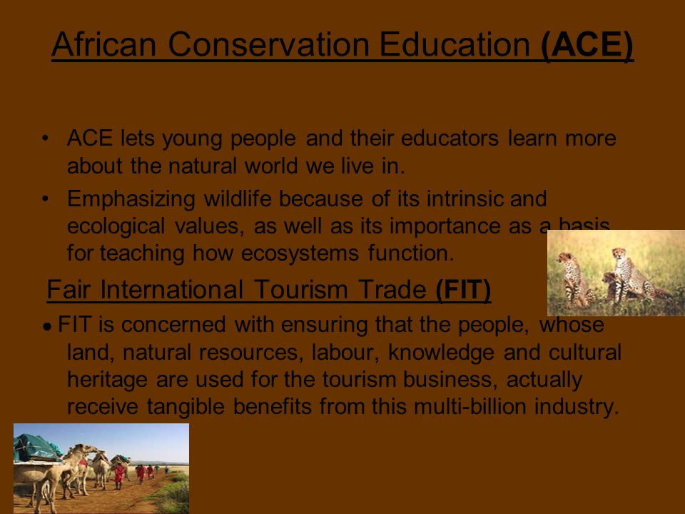 African Conservation Education (ACE) ACE lets young people and their educators learn more about the natural world we live in.