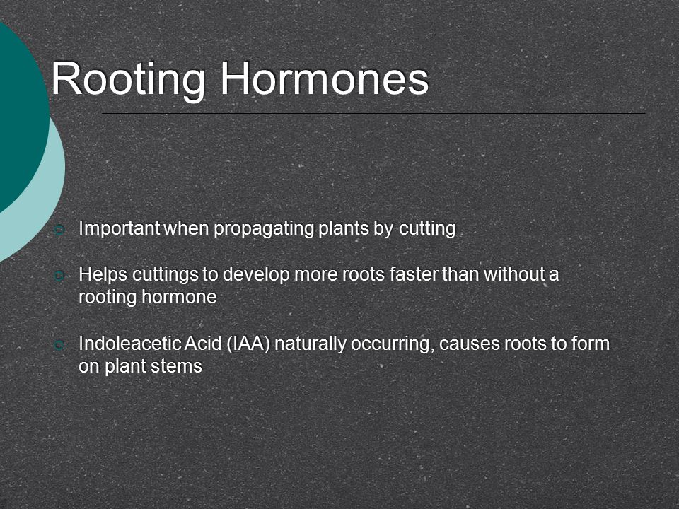 Rooting Hormones  Important when propagating plants by cutting  Helps cuttings to develop more roots faster than without a rooting hormone  Indolea