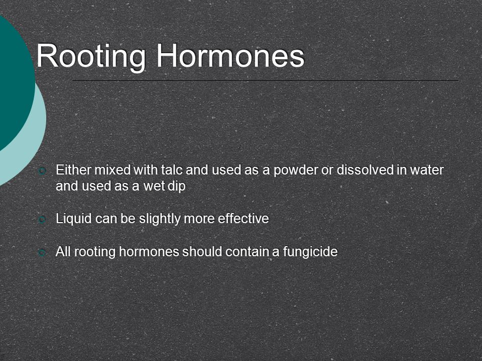 Rooting Hormones  Either mixed with talc and used as a powder or dissolved in water and used as a wet dip  Liquid can be slightly more effective  A