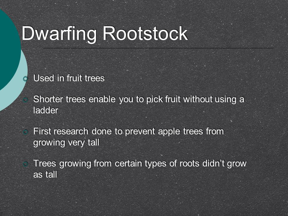 Dwarfing Rootstock  Used in fruit trees  Shorter trees enable you to pick fruit without using a ladder  First research done to prevent apple trees from growing very tall  Trees growing from certain types of roots didn't grow as tall  Used in fruit trees  Shorter trees enable you to pick fruit without using a ladder  First research done to prevent apple trees from growing very tall  Trees growing from certain types of roots didn't grow as tall