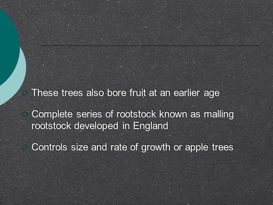  These trees also bore fruit at an earlier age  Complete series of rootstock known as malling rootstock developed in England  Controls size and rat