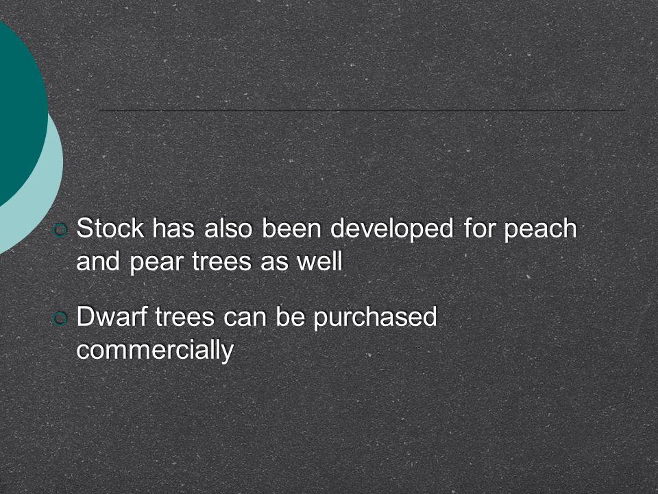  Stock has also been developed for peach and pear trees as well  Dwarf trees can be purchased commercially  Stock has also been developed for peach