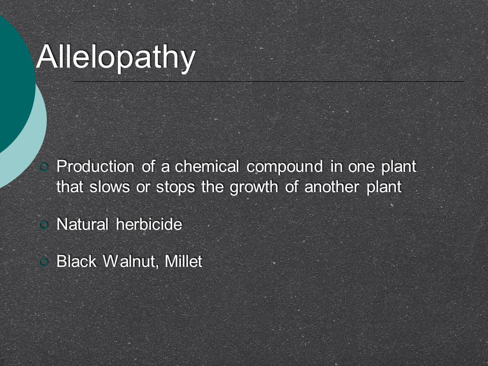 Allelopathy  Production of a chemical compound in one plant that slows or stops the growth of another plant  Natural herbicide  Black Walnut, Millet  Production of a chemical compound in one plant that slows or stops the growth of another plant  Natural herbicide  Black Walnut, Millet