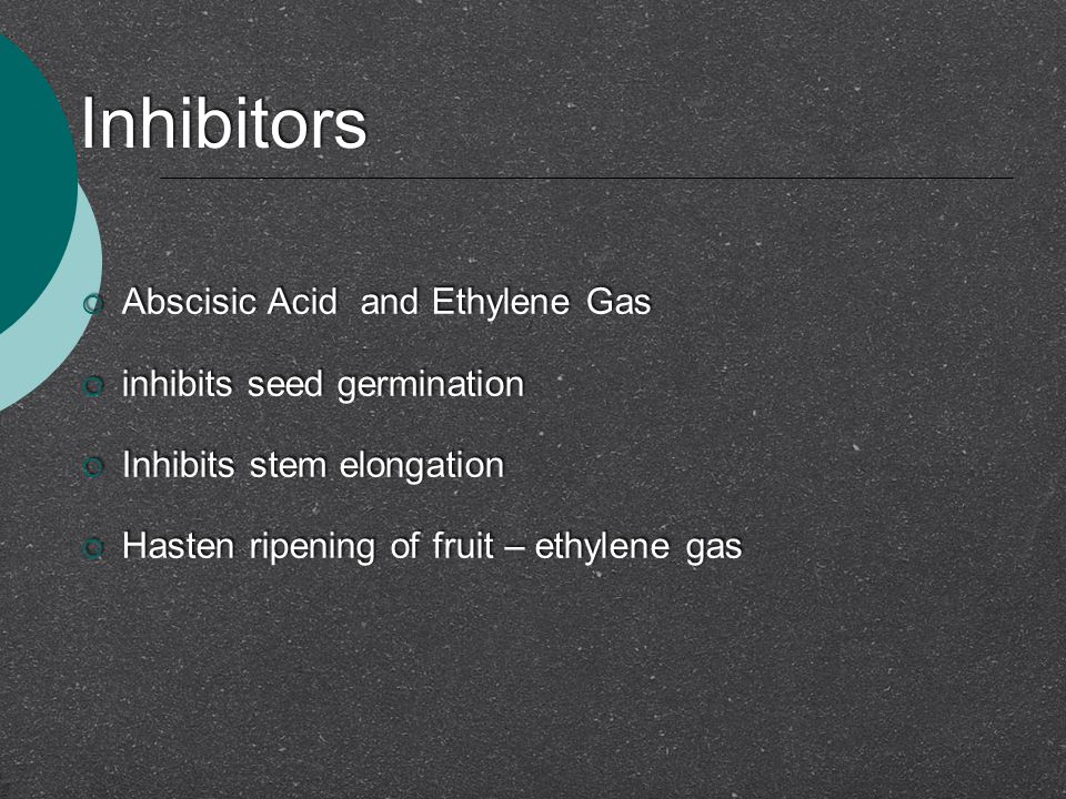 Inhibitors  Abscisic Acid and Ethylene Gas  inhibits seed germination  Inhibits stem elongation  Hasten ripening of fruit – ethylene gas  Abscisi