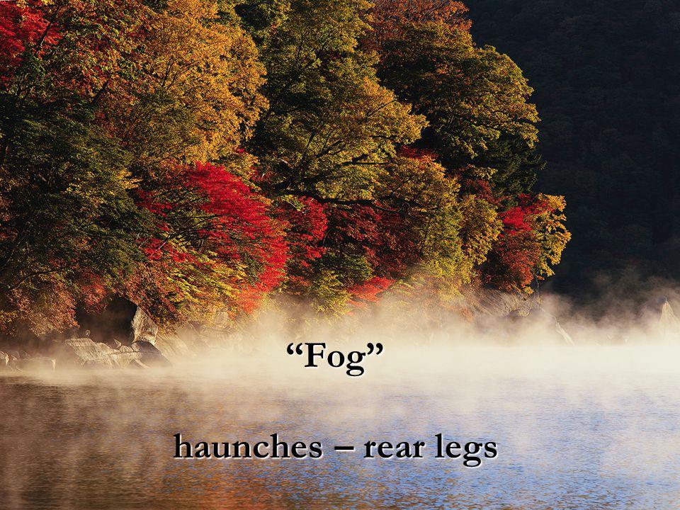 """Fog"" haunches – rear legs"