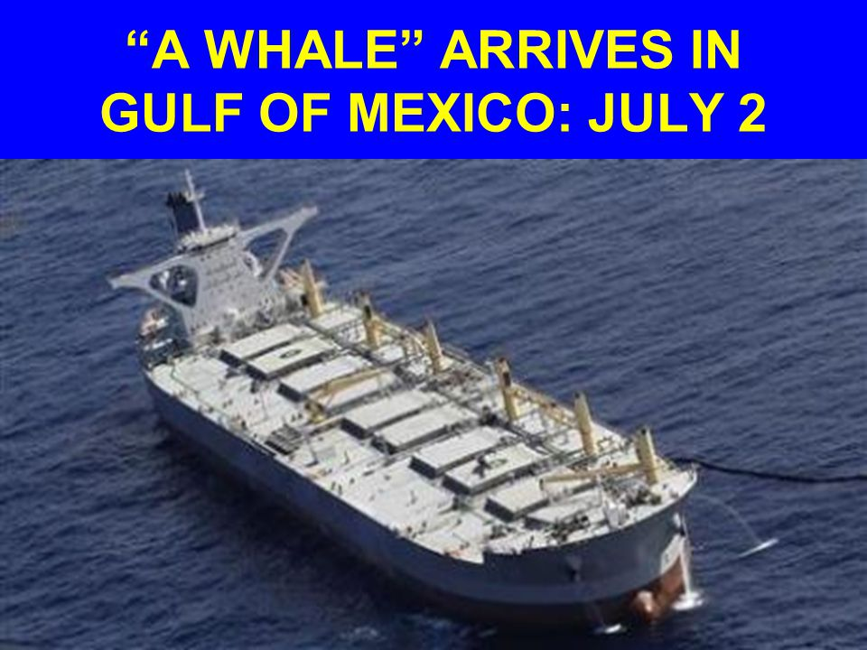 A WHALE ARRIVES IN GULF OF MEXICO: JULY 2