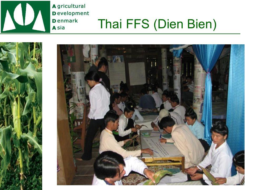 H'mong FFS (Lai Chau)
