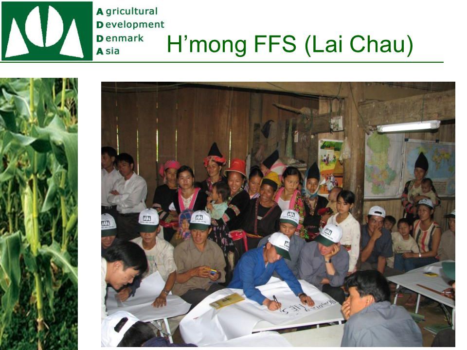 The Community Development Project Target group: Ethnic minorities Implemented in 6 provinces (Dien Bien, Lai Chau, Son La, Hoa Binh, Nghe An and Ha Tinh) Local team of facilitators (72+36) Farmer Field Schools (Maize, vegetables, and Climate Change ) (500 +300 +300) Community development groups (300+250)