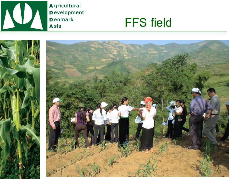 Impact on Maize Farms Yield /ha (kg) Output (1.000 VND) Input ( 1.000 VND) Profit (1.000 VND) % Net profit incr.