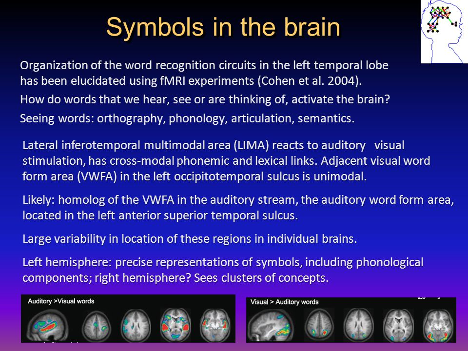 Symbols in the brain Organization of the word recognition circuits in the left temporal lobe has been elucidated using fMRI experiments (Cohen et al.