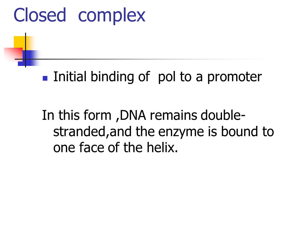 Closed complex Initial binding of pol to a promoter In this form,DNA remains double- stranded,and the enzyme is bound to one face of the helix.