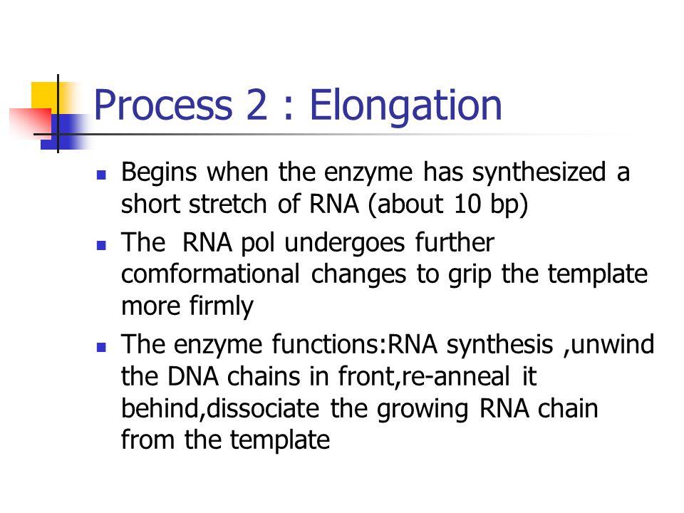 Fig 12-3-Elongation and termination Termination Elongation