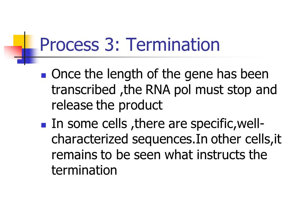 Process 3: Termination Once the length of the gene has been transcribed,the RNA pol must stop and release the product In some cells,there are specific