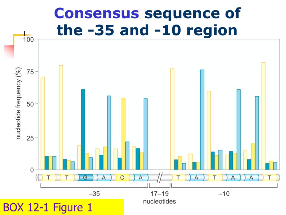 BOX 12-1 Figure 1 Consensus sequence of the -35 and -10 region