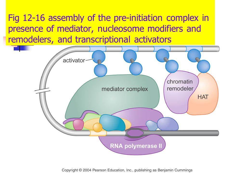 RNA Pol II holoenzyme .
