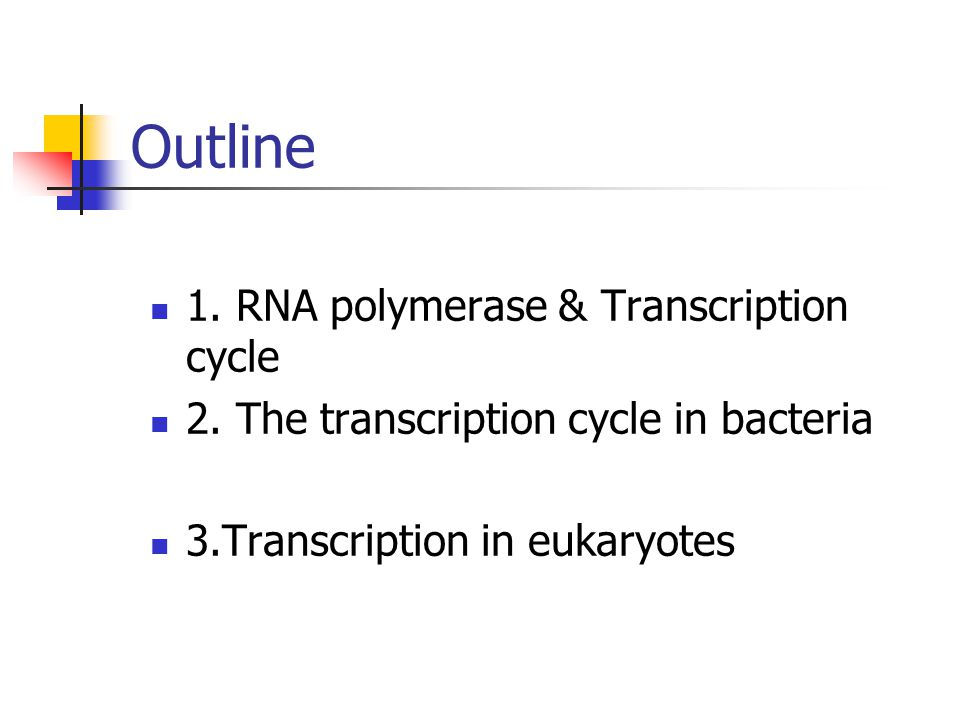 Outline 1. RNA polymerase & Transcription cycle 2. The transcription cycle in bacteria 3.Transcription in eukaryotes