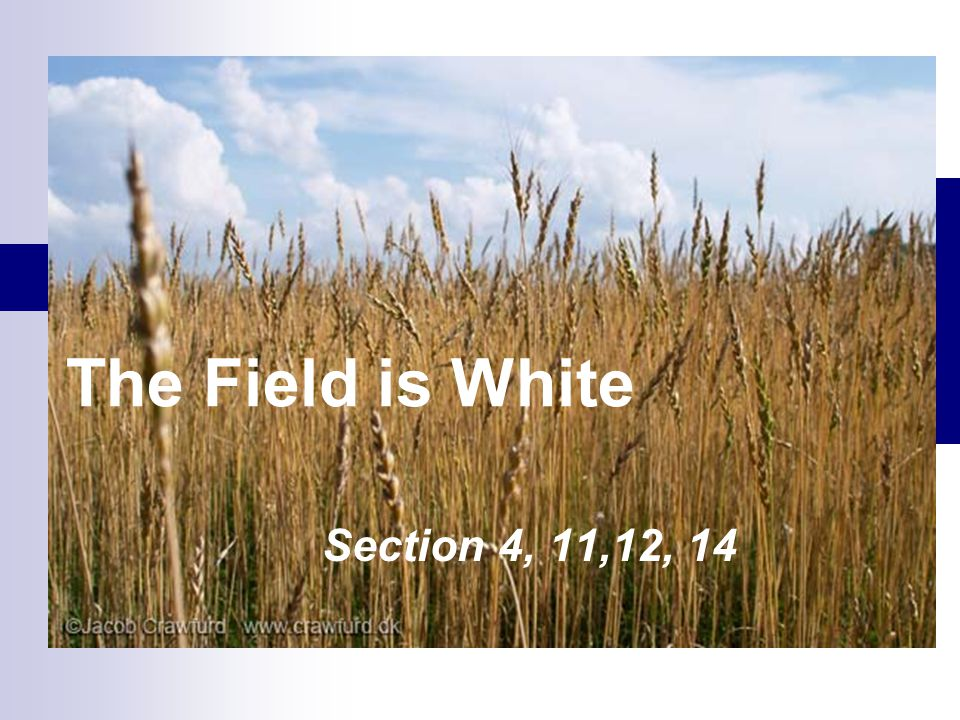 The Field is White Section 4, 11,12, 14
