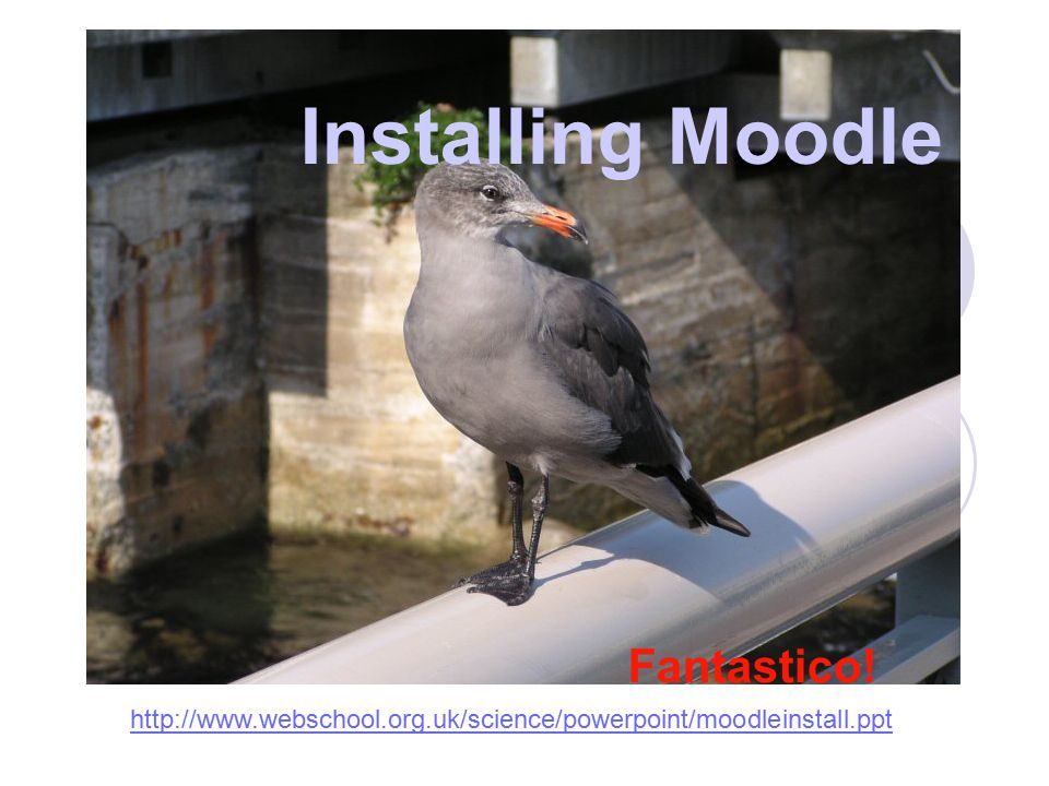 Installing Moodle Fantastico! http://www.webschool.org.uk/science/powerpoint/moodleinstall.ppt