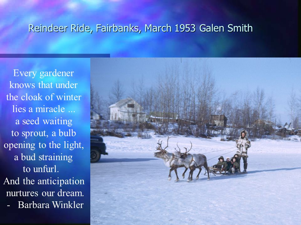 Reindeer Ride, Fairbanks, March 1953 Galen Smith Every gardener knows that under the cloak of winter lies a miracle...