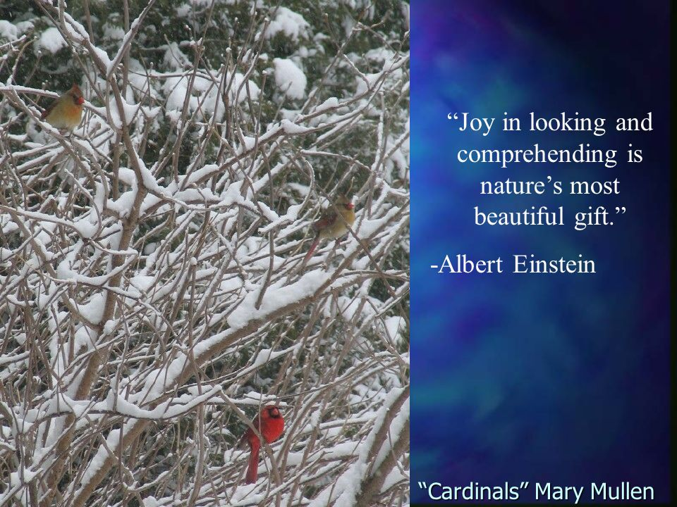 Joy in looking and comprehending is nature's most beautiful gift. -Albert Einstein Cardinals Mary Mullen