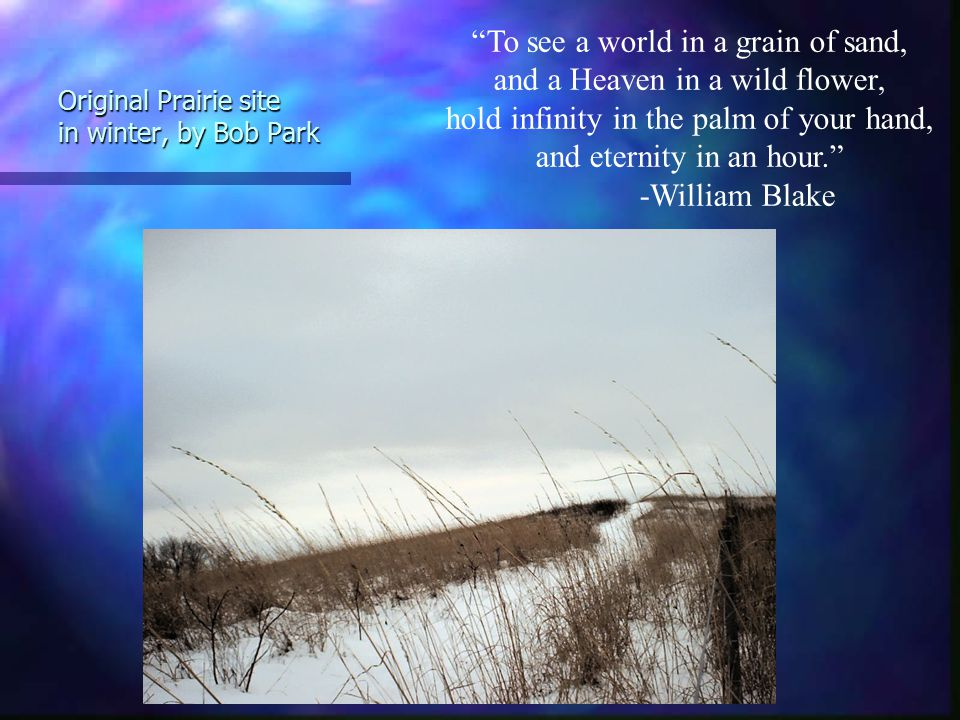 Original Prairie site in winter, by Bob Park To see a world in a grain of sand, and a Heaven in a wild flower, hold infinity in the palm of your hand, and eternity in an hour. -William Blake
