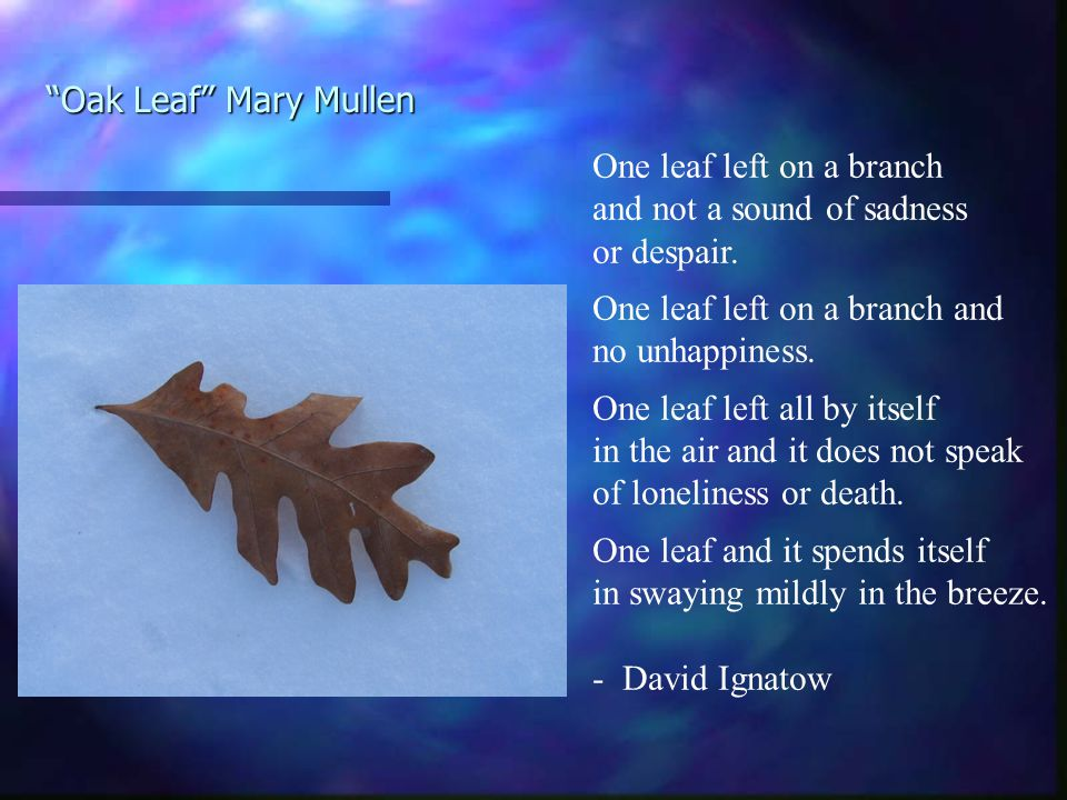 Oak Leaf Mary Mullen One leaf left on a branch and not a sound of sadness or despair.
