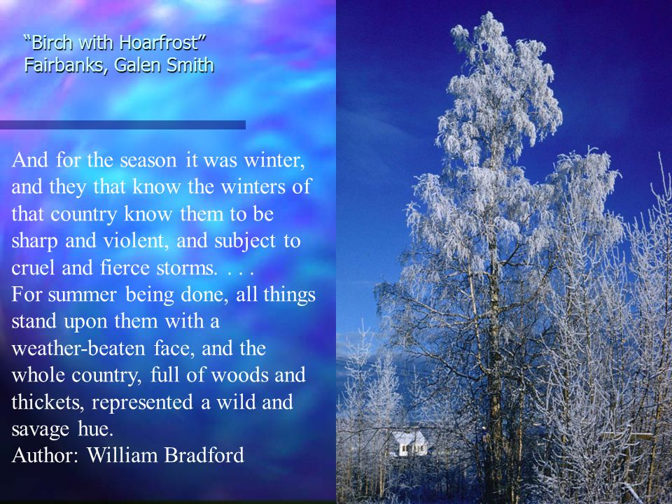 Birch with Hoarfrost Fairbanks, Galen Smith And for the season it was winter, and they that know the winters of that country know them to be sharp and violent, and subject to cruel and fierce storms....