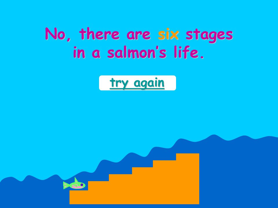 try again try again In the smolt stage of a salmon's life, it swims downstream towards the sea.