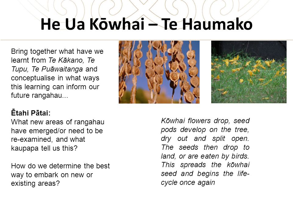 He Ua Kōwhai – Te Haumako Bring together what have we learnt from Te Kākano, Te Tupu, Te Puāwaitanga and conceptualise in what ways this learning can inform our future rangahau...
