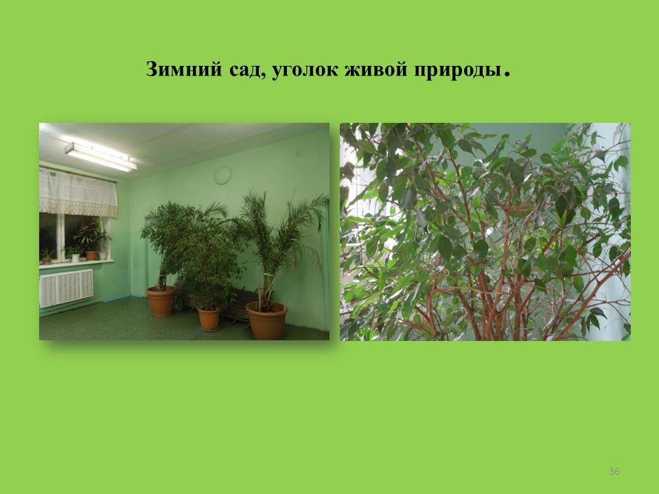 Зимний сад, уголок живой природы. 36