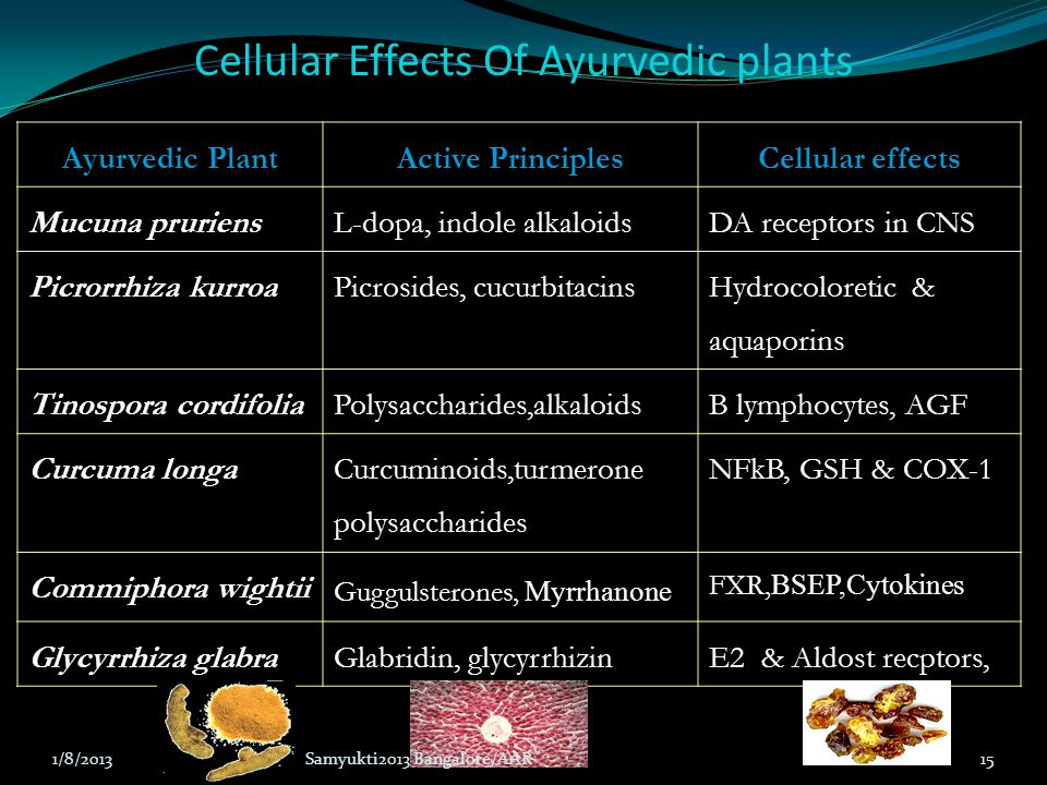 Cellular Effects Of Ayurvedic plants Ayurvedic Plant Active Principles Cellular effects Mucuna pruriens L-dopa, indole alkaloids DA receptors in CNS P