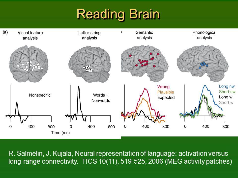 Reading Brain R. Salmelin, J. Kujala, Neural representation of language: activation versus long-range connectivity. TICS 10(11), 519-525, 2006 (MEG ac