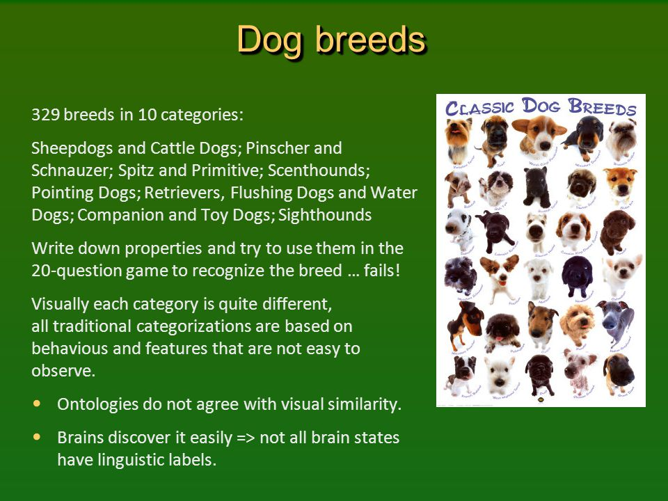 Dog breeds 329 breeds in 10 categories: Sheepdogs and Cattle Dogs; Pinscher and Schnauzer; Spitz and Primitive; Scenthounds; Pointing Dogs; Retrievers